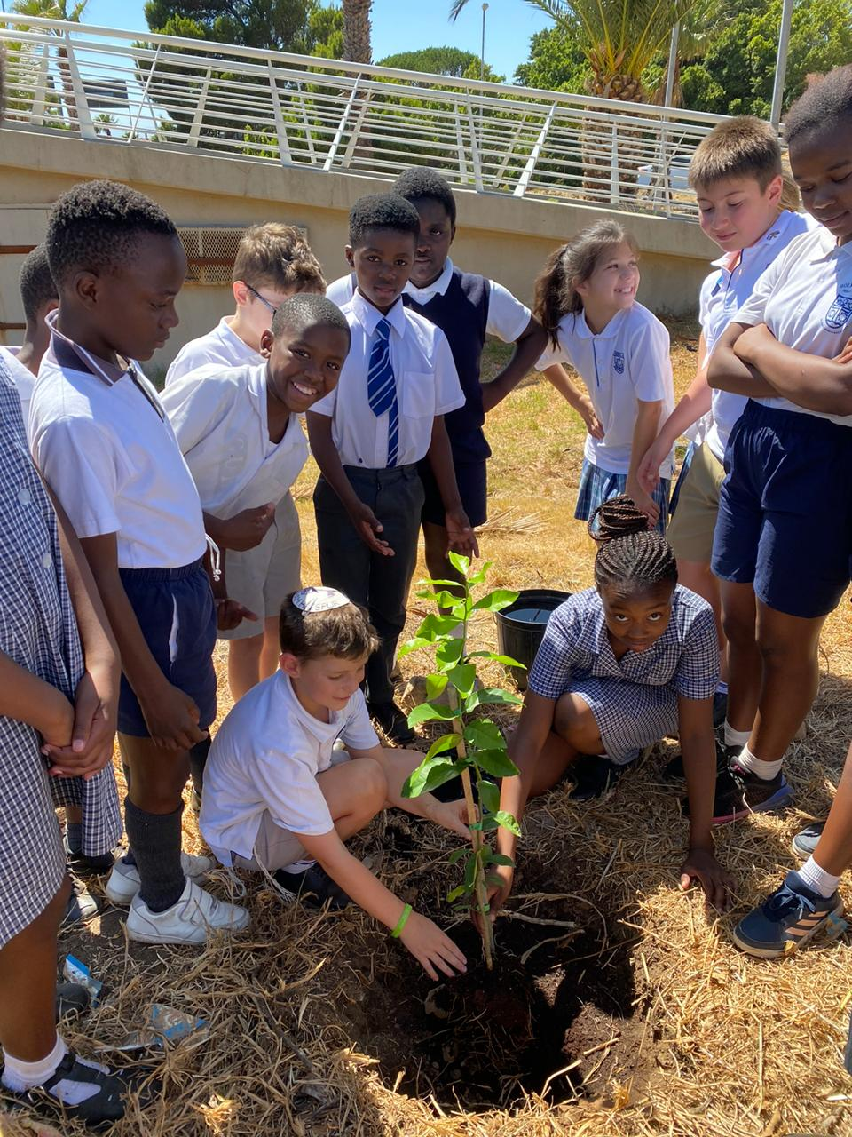 Board, Herzlia and Holy Cross RC celebrates Tu B'Shevat in community service